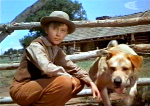 Old-Yeller-pics-old-yeller-30507787-500-353